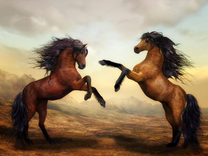 2 horses 00025