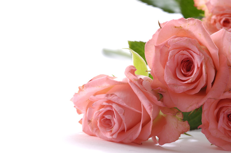 3 pink roses 00214