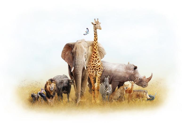 African Safari 00744