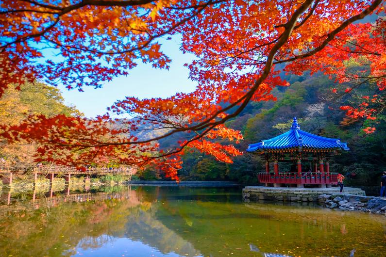 Autumn Naejangsan, South Korea. 00433