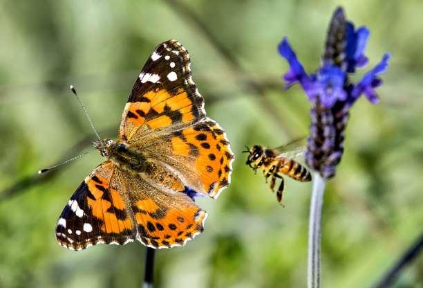 Бабочка 01270