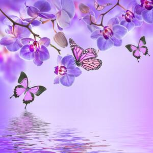 Бабочки 01413