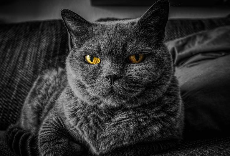 Black CAT 00023