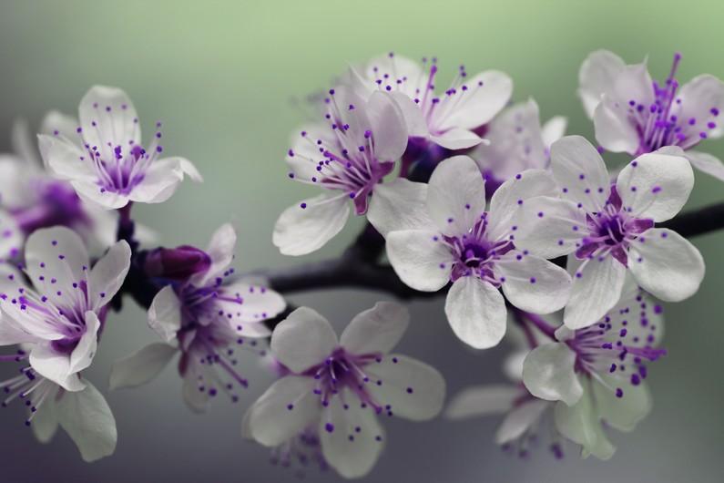 Blossom 00108