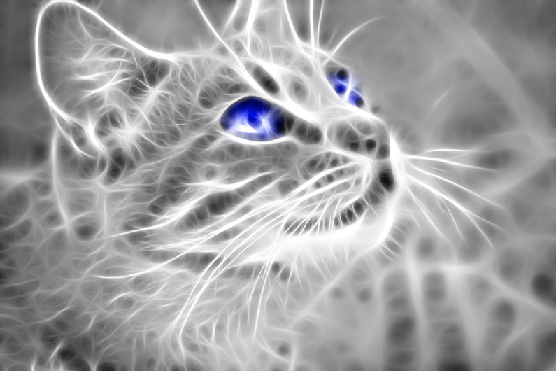 Cat blue eyes 00249