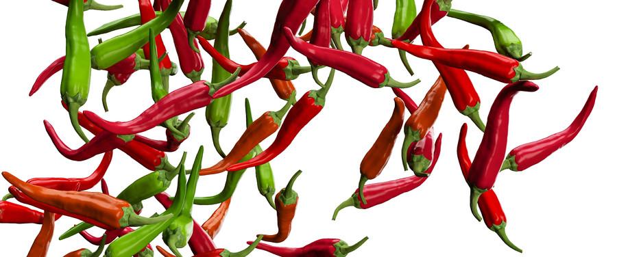 Chili pepper 00313