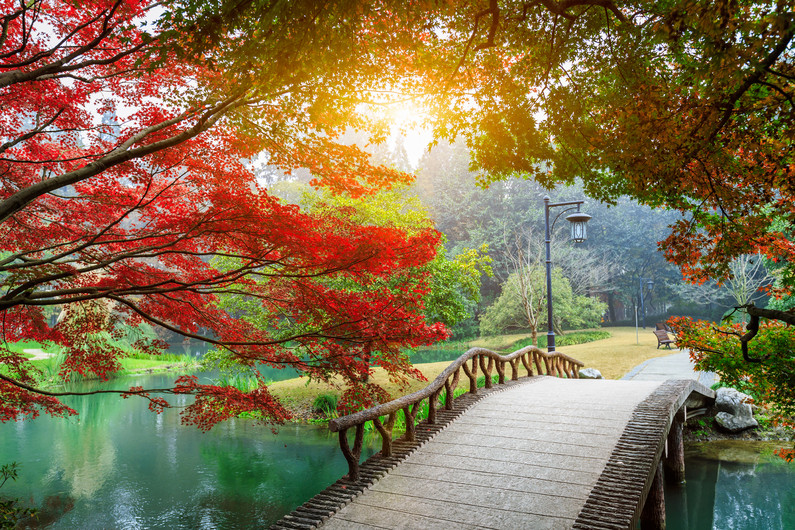 Chinese garden bridge 00488