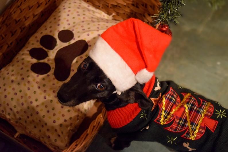 Christmas dog 00136