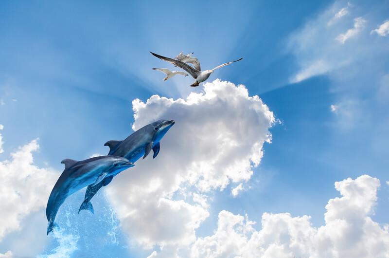 дельфины 01425