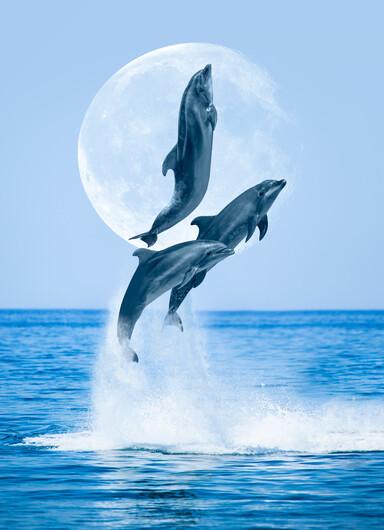 Дельфины 01441