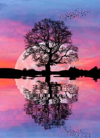 Дерево 01415