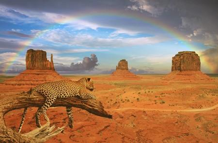 Desert Cheetah 00515