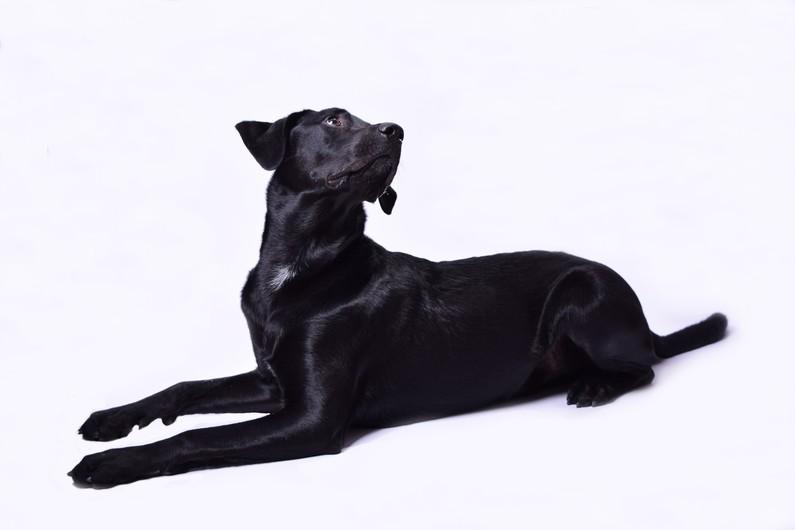 Dog 00150