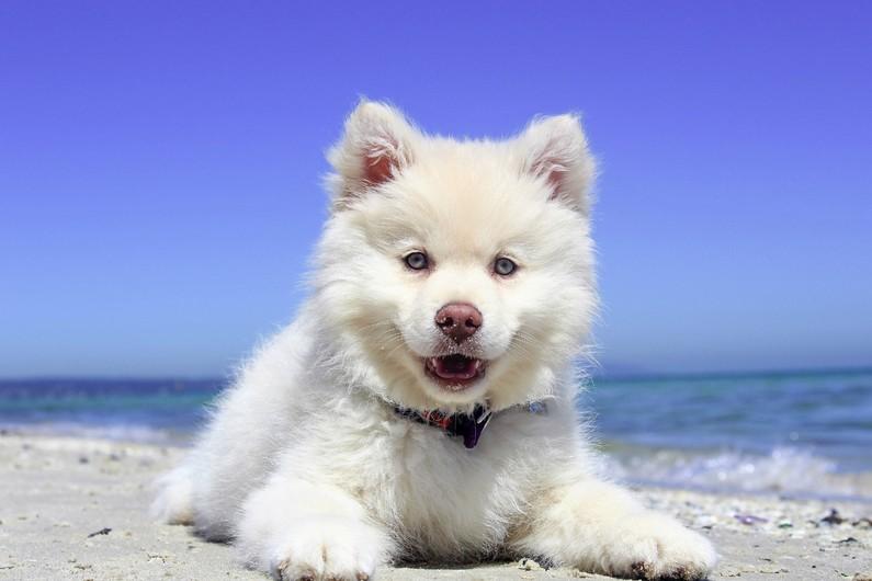 Doggy on the beach 00100