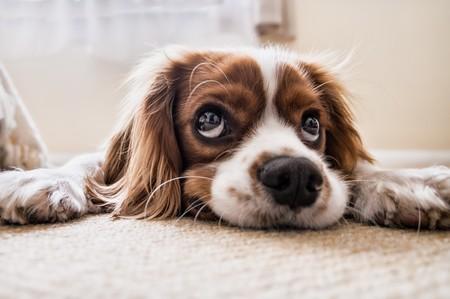dog's eyes & nose 00158