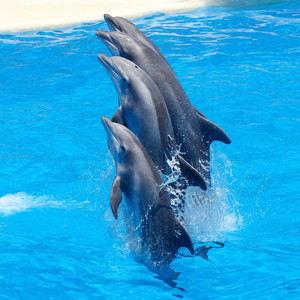 Dolphins 00820