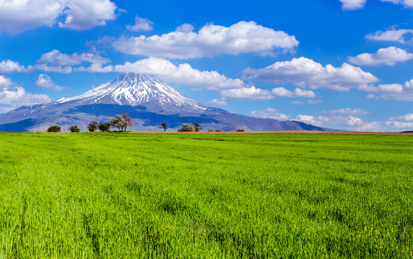 Field and mountain landscape 00965