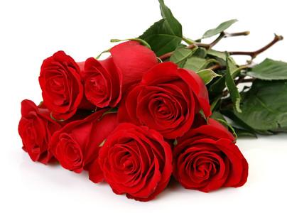 Fine roses 00219