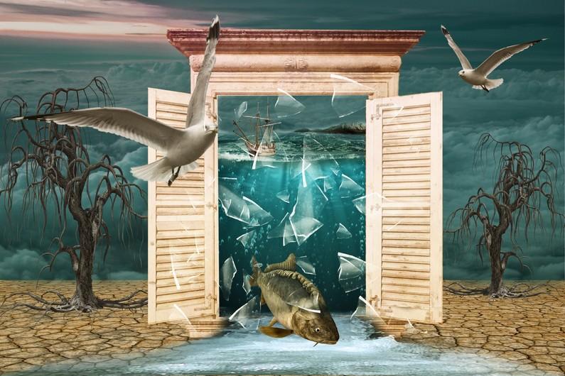 Fish & seagulls 00119