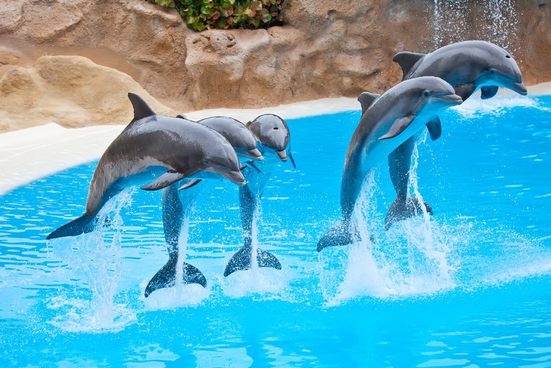Five dolphins jumping 00790