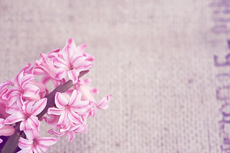 Flower 00520