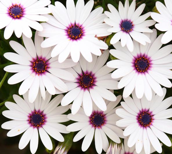 Flowers 00922