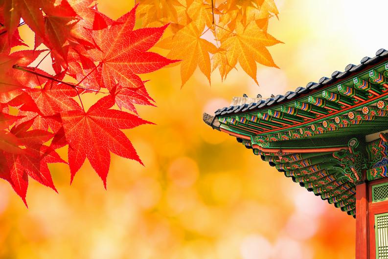 Gyeongbokgung Palace autumn leaves in Seoul 00977