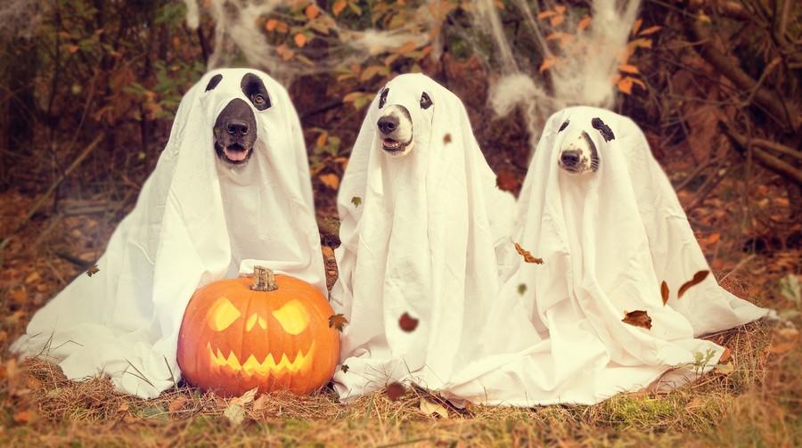 Halloween 00339