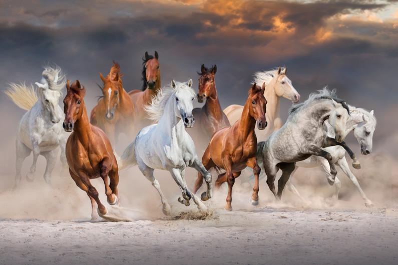 Horse herd 00721