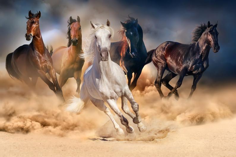 Horses in the desert 00714