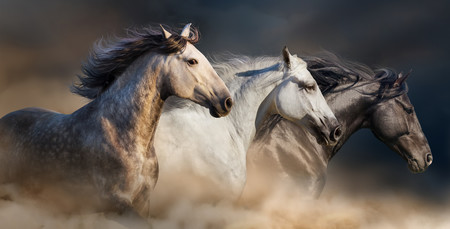 Horses with long mane 00718