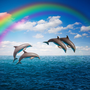 Jumping dolphins with rainbow 00560
