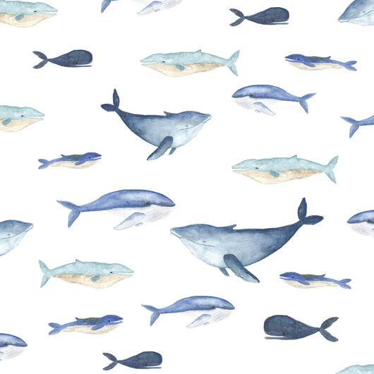 киты 01506