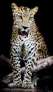 Леопард 01476