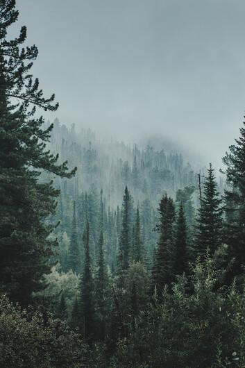 лес 01377