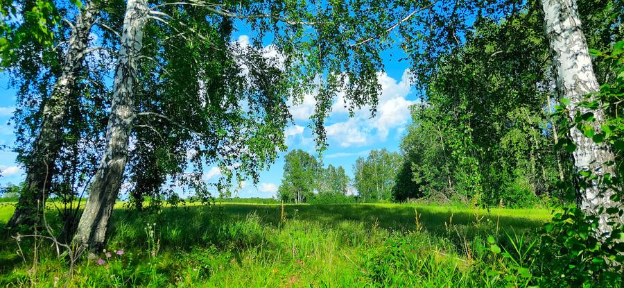 лес 01531