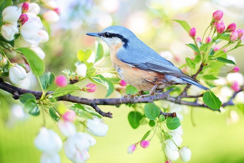 Little bird 00026