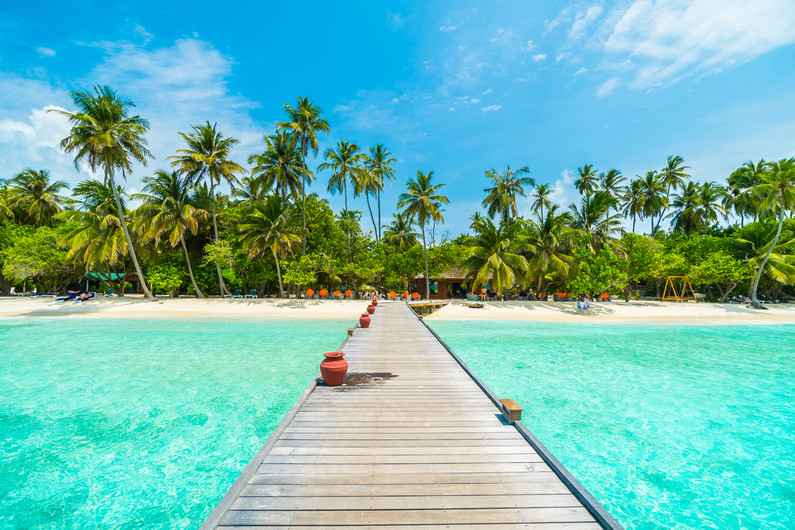 Maldives with a coconut palm tree 00720