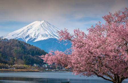 Mountain Fuji in spring ,Sakura 00970