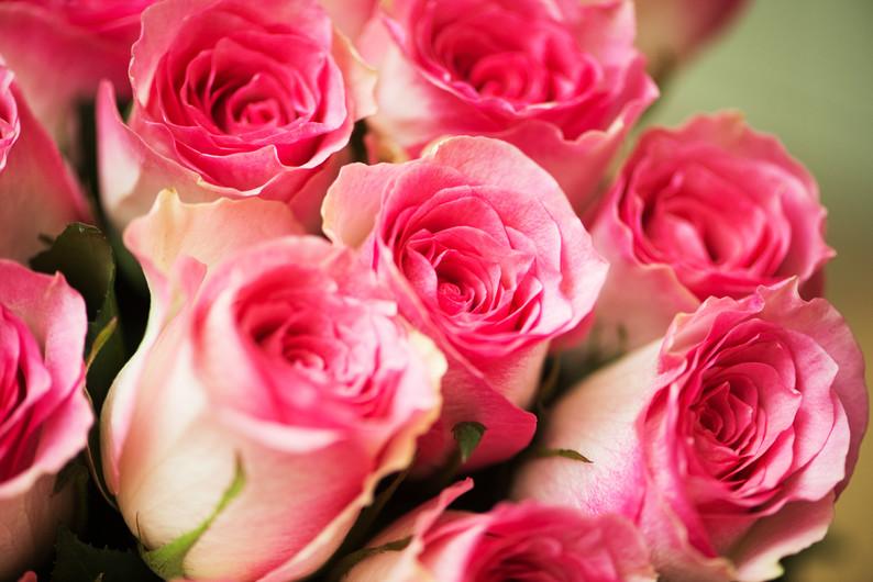 Nice roses 00221