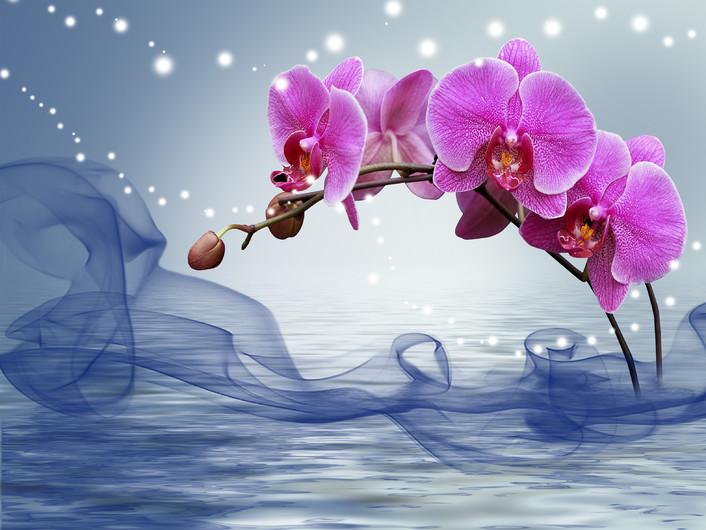 орхидеи 01035