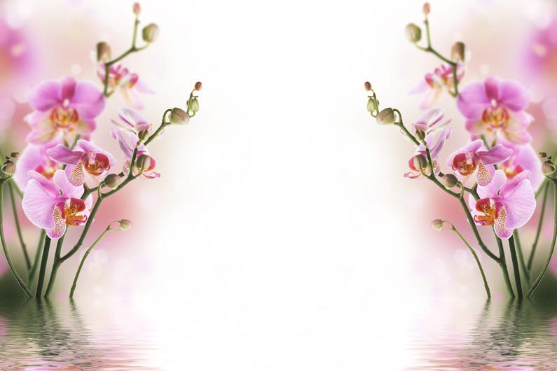 орхидеи 01038