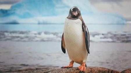 Пингвин 01286