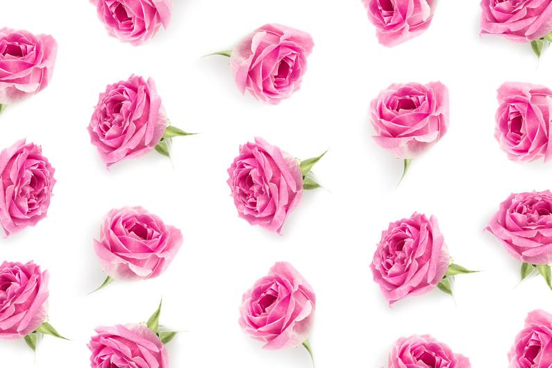 Pink rose background 00233