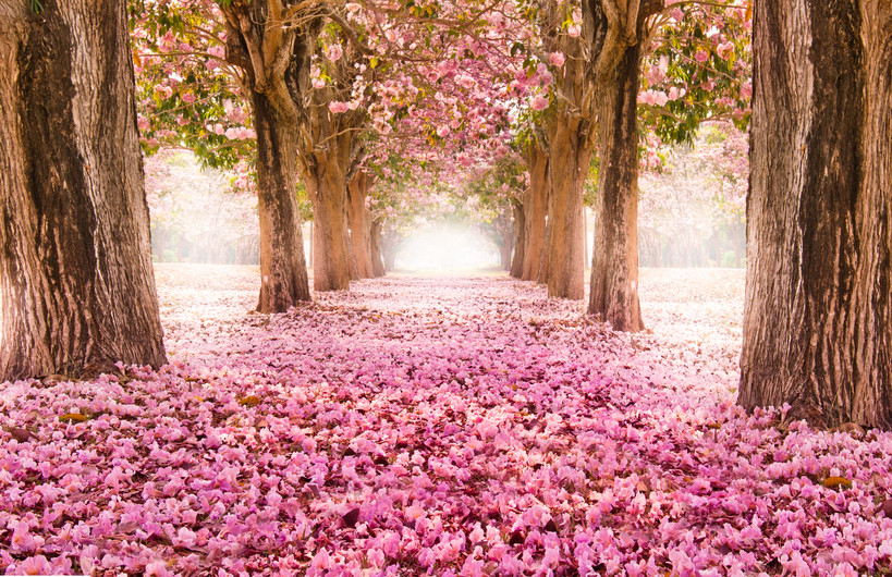 Romantic tunnel 00220