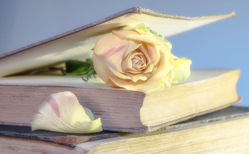 Rose in the book 00632