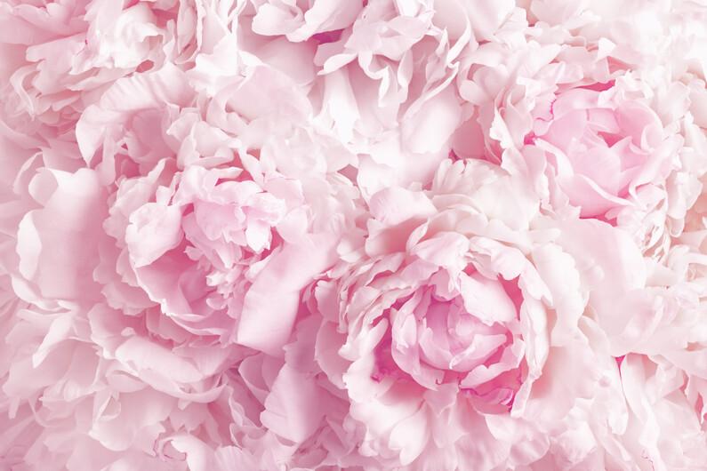 Розы 01484