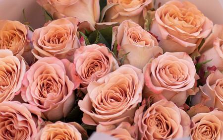 Розы 01462
