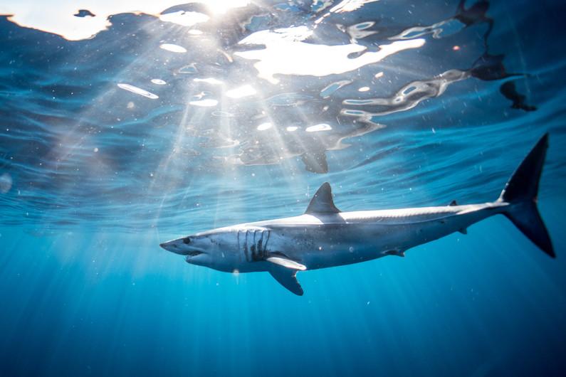 Shark Cabo San Lucas, Mexico 00847