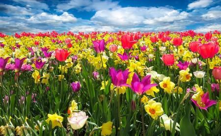 Spring awakening 00664